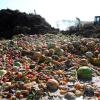 Alimentando teléfonos móviles con desechos alimentarios