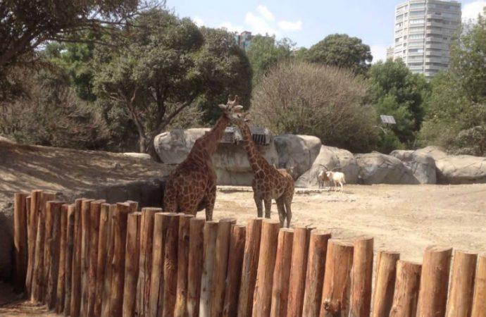 Fortalecer inspección en zoológicos para asegurar bienestar de animales: Rocha Ladrón