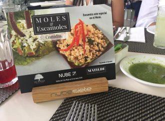 Nube 7  presenta su Festival ¨Moles y Escamoles¨