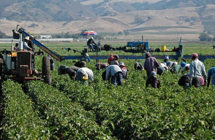 Certidumbre a los pequeños productores, con los nuevos apoyos para comercialización: CNC