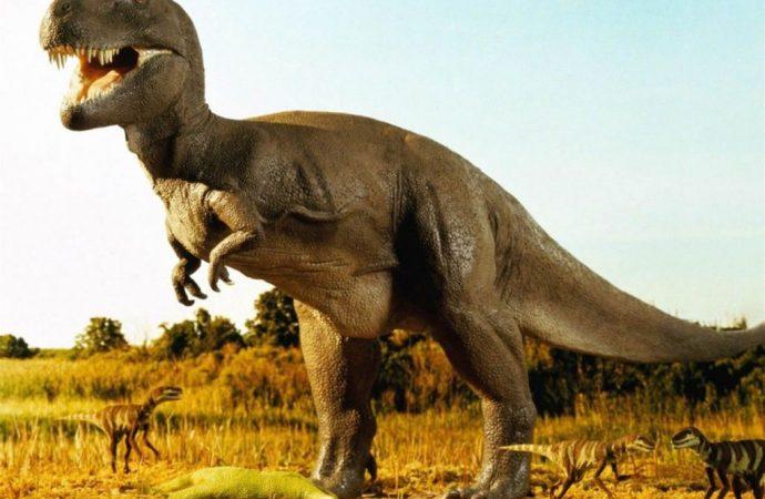 Tras la desaparición de los dinosaurios por el impacto de un asteroide, la vida se recuperó en 30 mil años