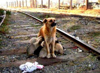 Emplacamiento, medida preventiva contra el abandono de perros en la calle