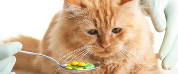La Anorexia en Gatos, síntoma frecuente de enfermedad