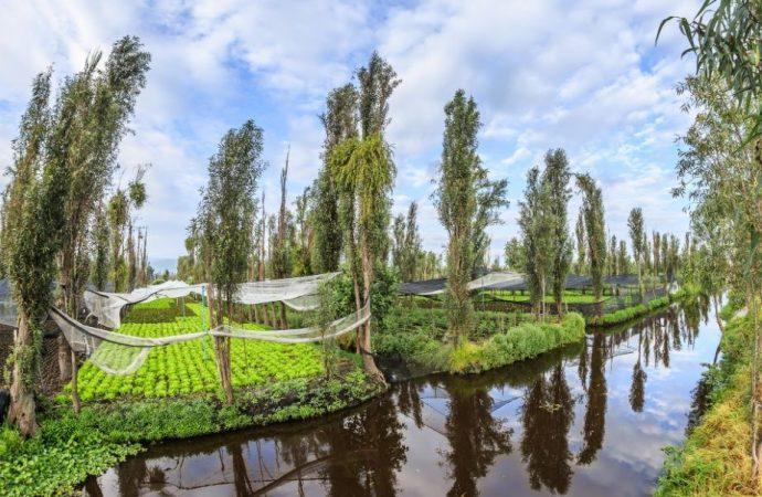 Xochimilco vive un momento clave para rescatar su tradición chinampera