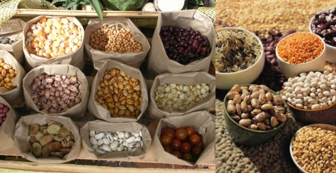 Crean en la UNAM sistema para alargar la vida de granos y semillas almacenados