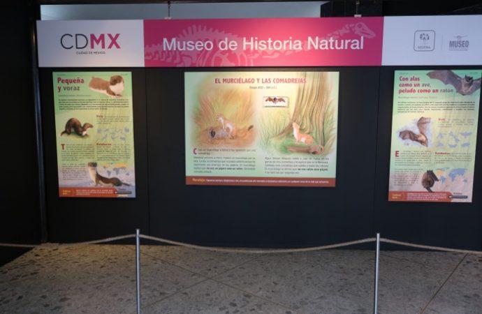 Murciélago y comadreja, personajes del Museo de Historia Natural en julio