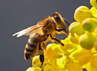 Sin las abejas desaparecerían la mitad de las plantas, afirma académica