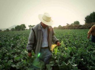 Establecer condiciones para que productores de tomate compitan en el mercado del norte: CEDRSSA