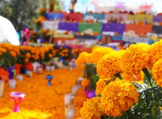 Festival del cempasúchil engalana Paseo de la Reforma