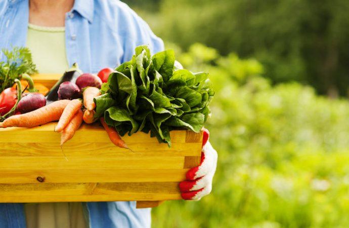 México es décimo exportador de alimentos en el mundo