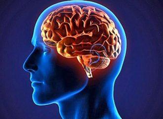 Científicos chinos realizarán el mayor mapa del cerebro humano en 3D