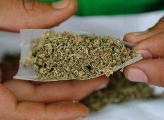 Importante tener un marco jurídico que acabe con el prohibicionismo de la marihuana