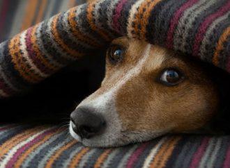 Invierno, época en la que mascotas requieren más cuidados