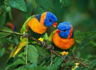Pérdida de hábitat, la mayor amenaza para las aves en países amazónicos