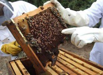 Se plantean líneas de acción para fortalecer el sector apícola