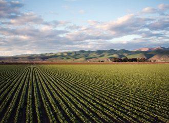 Ciberagriculltura, alternativa para mejorar cultivos sin modificaciones genéticas