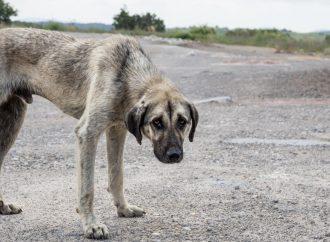 Va maltrato animal al código penal; proponen tipificarlo como delito