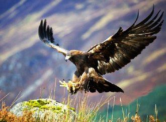 Proteger santuario del águila real en Zacatecas, piden senadoras del PT