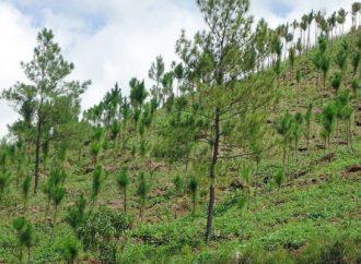 Norman reforestación permanente para CDMX