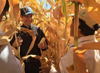 Piden declarar al maíz Patrimonio Nacional Alimentario