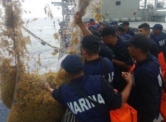 SEMAR ha recolectado 155 toneladas de sargazo desde Mayo
