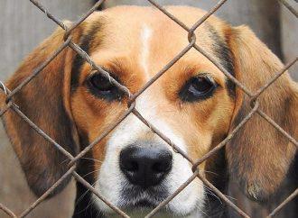 HSI capacita a funcionarios de la CDMX para identificar maltrato y crueldad en animales