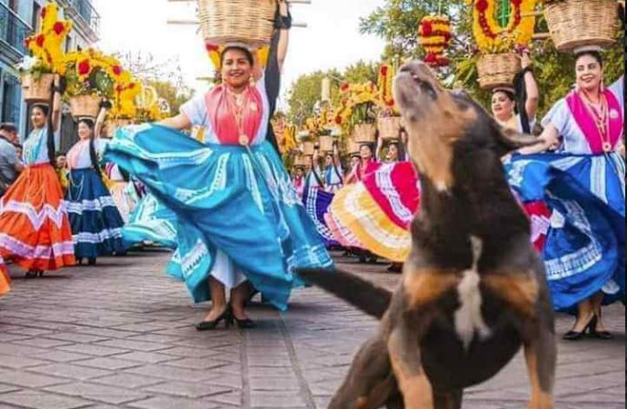 En Oaxaca al popular perro de las calendas, le prohíben asistir