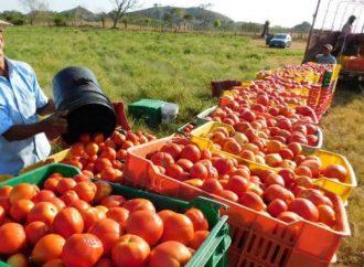 Tomateros siguen en busca de frenar medidas arancelarias