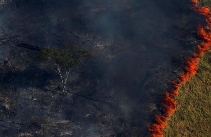 WWF, en alerta por la Amazonía