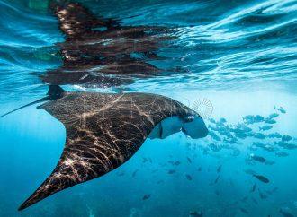 Piden impulsar leyes para proteger mares y océanos en México
