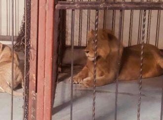 Rescatan a animales exóticos de centro nocturno