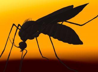 ¿Usaron insecticidas caducos en Jalisco?