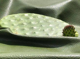 Piel vegana de nopal, invento mexicano que triunfa en Milán