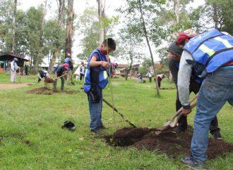 Xochimilco y caballerengos reforestan Bosque de Nativitas