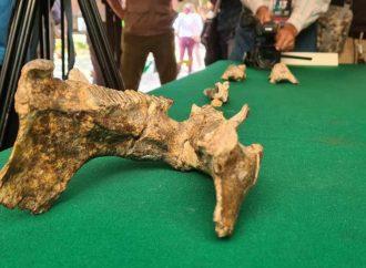 Hallan restos de capibara de más de 11 mil años en Chiapas