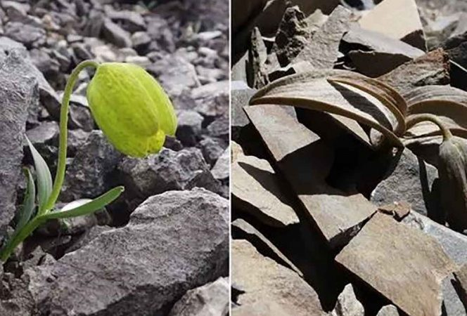 Planta evoluciona para hacerse menos visible a los humanos