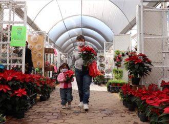 Productores xochimilcas inician venta de Nochebuenas