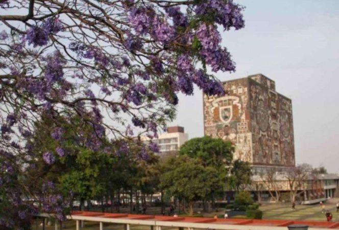UNAM y Harvard trabajan en tratamiento para pacientes covid