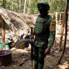 Ejército mexicano localiza por primera vez sembradíos de coca