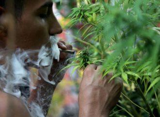 Prevén en San Lázaro avalar el lunes uso lúdico de mariguana