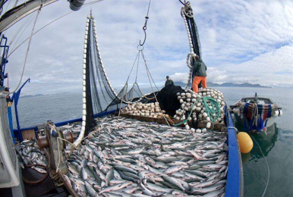 Necesaria ley de biodiversidad que proteja e impulse sector pesquero nacional