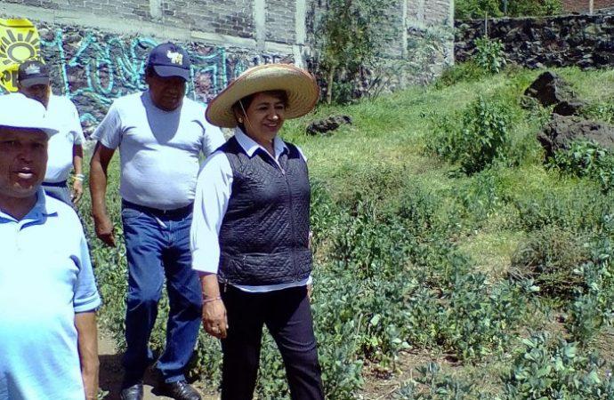 """Propone Ana Julia Hernández """"operación rastrillo"""" contra la delincuencia en Xochimilco"""