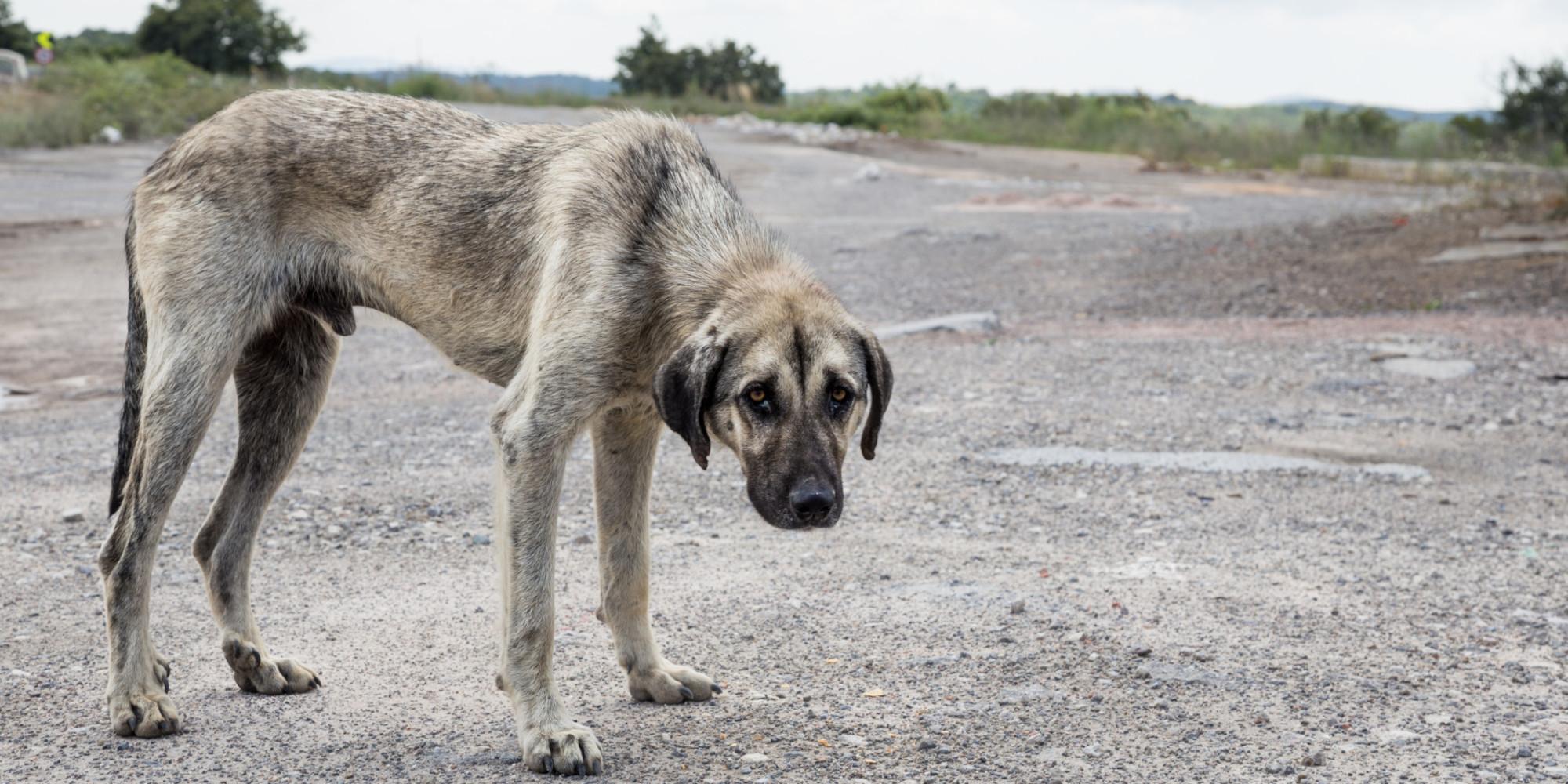 Impulsa PAN reforma al Código Penal Federal para tipificar como delito el maltrato animal