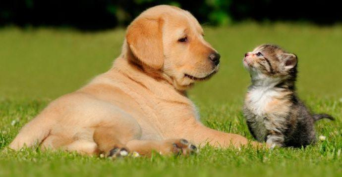 Necesario sustituir compra de mascotas por la adopción