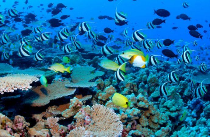 Advierten especialistas que en 2050 podría haber más plásticos que peces en los mares