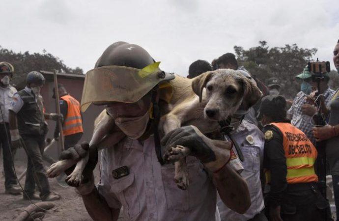 El Equipo de Rescate de Animales de HSI se dirige a Guatemala