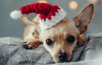 Evita regalar mascotas este Día de Reyes