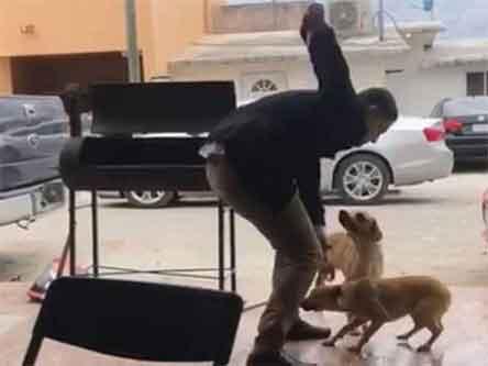 Ofrecen 50 mil pesos de recompensa por el que apuñaló a perrito