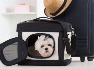Antes de viajar con tu mascota revisa la Norma Oficial Mexicana