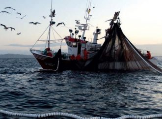 Urge regular permisos de pesca, se avizora desabasto de especies
